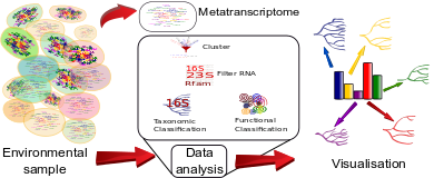 metranscriptomics|